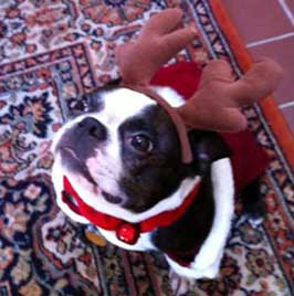 Abby with Antlers